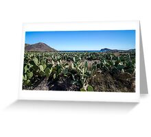 Chumberas (cactus) on the beach of the Genoveses. Greeting Card