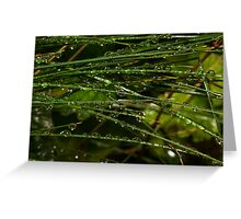 grass coverd with raindrops Greeting Card