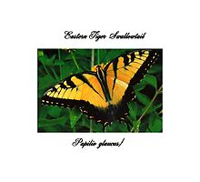 Tiger Swallowtail Butterfly by valleygirl