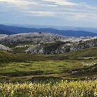 bogong high plains by col hellmuth