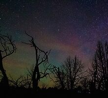 Aurora Starscape Cosmos Over Burnt Forest  by Gavin Heffernan