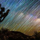 Rainbow of Star Trails with Joshua Tree in Foreground by Gavin Heffernan