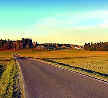 Country road through indian summer | landscape photography by Patrick Jobst