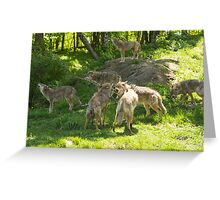 A pack of howling coyotes Greeting Card