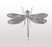 Dragon fly print by AnchorArt