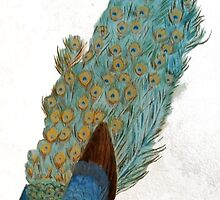 japanese peacock by eleanor-may