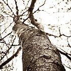 Black tree by soffee12