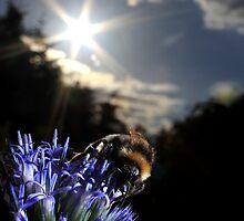 Bumblebee on globe thistle by turniptowers