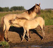 Konik Horse with Foal by Jo Nijenhuis