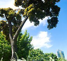 RPDY's Tree by ziziail