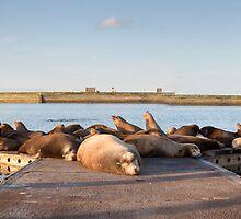 Sea Lion Retreat by Jim Stiles