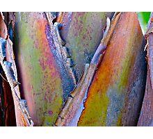 """Palm Abstract III"" Photographic Print"