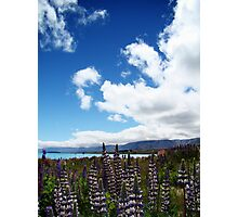 Lakeside Lupins Photographic Print