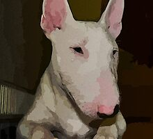 Bull terrier by Christine Photography