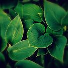 Leaf Patterns by goddarb