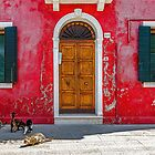 Door, windows and cats by Roberto Pagani