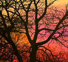 Colorful Tree by Gilda Axelrod