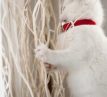 Kitten (Odin) with Twigs  by Kim-maree Clark