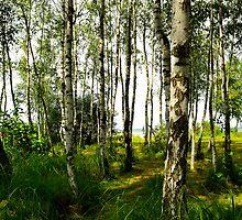 Birchwood by IryshkaR