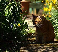 Peeping tom by turniptowers