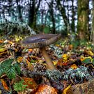 We All Blend In ~ Wild Mushrooms ~ by Charles & Patricia   Harkins ~ Picture Oregon