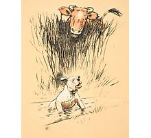 Bull and dog in field Photographic Print