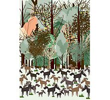 Woodland horses with owls and birds Photographic Print