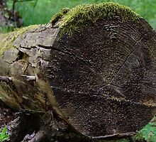 Log close-up by Kaj Barck