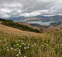 Banks Peninsular, New Zealand by Kevin Hellon