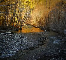 That Early Old Sun by Charles & Patricia   Harkins ~ Picture Oregon