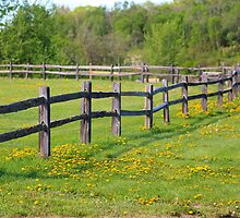 Fencetastic! by Don Arsenault