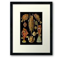 Fishes on Black Framed Print