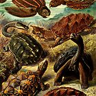Land and Sea Turtles by dianegaddis