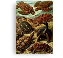 Land and Sea Turtles Canvas Print