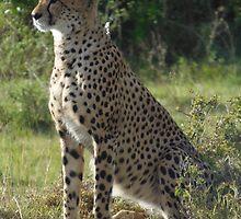 Wildlife of Kenya by KACPhotos