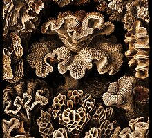 Image of Fungi and Sponges by dianegaddis
