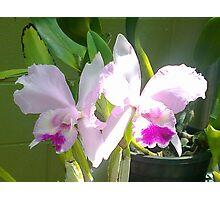 Pretty Pink & Iris Photographic Print