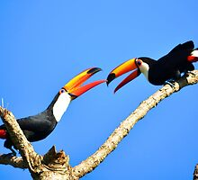Toucans by JoEveritt