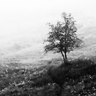 7.6.2014: Tree, Path and Fog by Petri Volanen