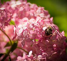 Working the Pinks by OzPhoto