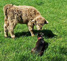 Tarn Meets Her Match by Jamie  Green