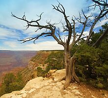 South Rim Card by JohncardSmith