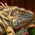 Green Iguana by Chris  Randall