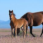 Frisky Foal by Kelly Jay
