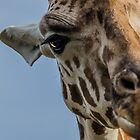 "Giraffe II: ""Whatchu looking at?"" by Adam Le Good"