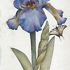 Blue Iris with Swallowtail Butterfly by Ray Shuell