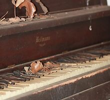 Piano left behind by wingsonafield