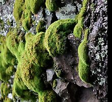 Mossy by lorenvictoria