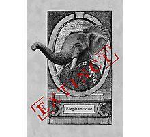 Elephantidae Exstinta Photographic Print