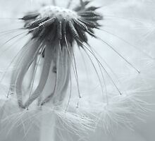 wispy weed by Laurie Minor